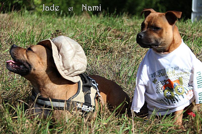 265-Jade-Nami