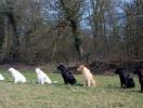 retr-groupe-chiens1.jpg