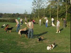 Exercice difficile ! Les chiens sont debout et la plupart des maîtres sont loin... (Il est si tentant d'avancer tout doucement ou de s'asseoir...)