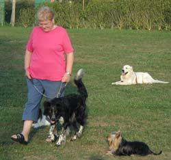 Slalom entre les chiens couchés à l'écart de leur maître. Pas évident pour tous...