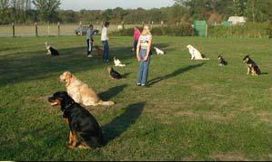 Les chiens sont assis, les maîtres sont loin... contrôle à distance, confiance !