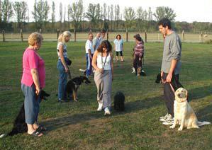 Il faut avoir confiance pour marcher ainsi au milieu des autres chiens, et sans laisse !