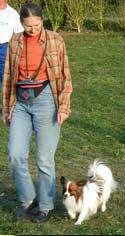 Même les petits chiens sont capables de marcher au pied et sans laisse. Bien socialisés (merci l'école du chiot !) ils n'auront pas peur de côtoyer plus gros qu'eux..