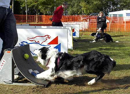 flyball1