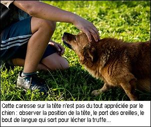langage-canin-caresse