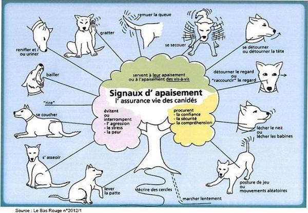 langage-canin-signaux