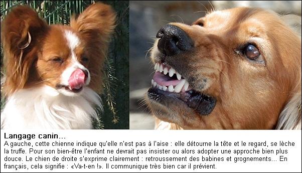 langage-canin