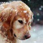 snow-dog-l